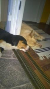 duo Hund