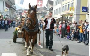 Sennenhund Schweiz