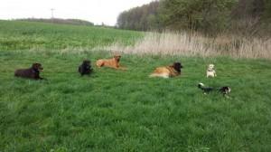 Hunde Gruppe