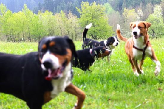 Zwangfreie Begegnungen sind ebenso wichtig für eine artgerechte Hundehaltung eines Familienhundes.