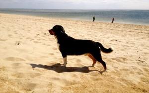 swissydog von den Gänsewiesen