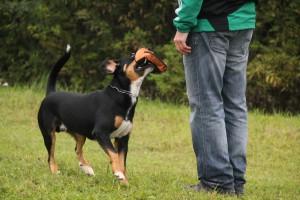 Leistungsprüfung BGH, Rettungshundeprüfung,
