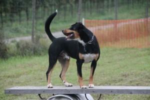 Hunde Ausbildung