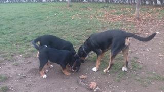 Gänsewiesen Hunde