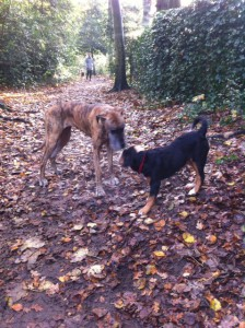 Walli mit Dogge Yvette