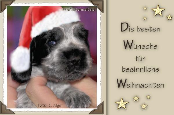 Danke für die vielen Weihnachtswünsche! - Gretes Sennenhunde Blog