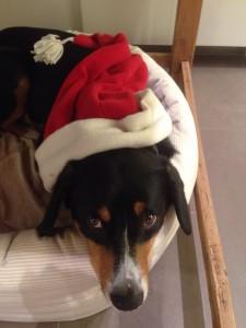 Weihnachtsmütze Hund