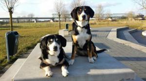 Gänswiesenhunde