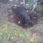 Ich glaube Dustyn ist beim Brunnen graben