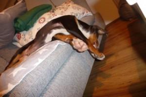 Manchmal darf ich sogar mit auf das Sofa. Hier bin ich einfach eingeschlafen. Ich schlafe in den lustigsten Positionen.
