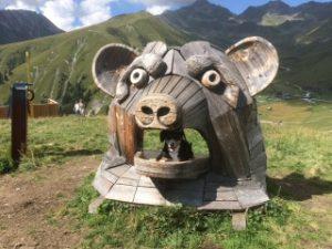Im Maul des Schweines
