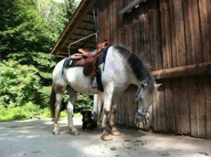 Pferd mit Hund - wo ist Sally?