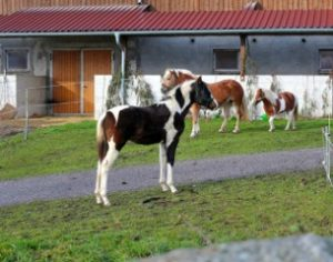 Bauernhoftiere