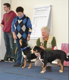 Hunde Show Foto