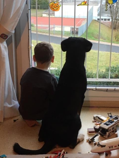 Der erste Jahreswechsel mit Hund