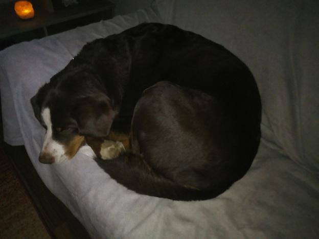 Danke Für So Einen Tollen Hund Gretes Sennenhunde Blog